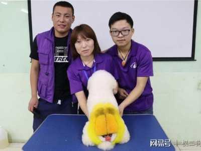 宠物美容网上免费学习 宠物美容师好学习吗