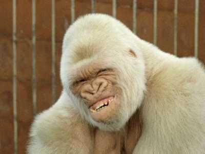 罕见白化动物 地球上24大罕见的白化动物