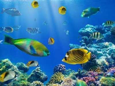与小型鱼混养的大型鱼 混养热带鱼必须注意这些问题