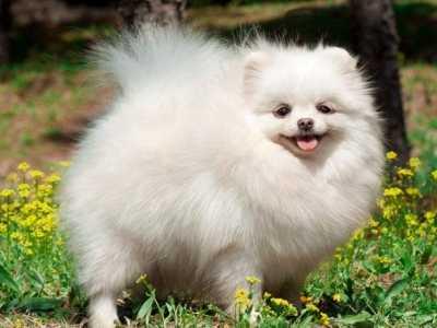 世界咬合力最强的狗 十大世界最可爱的狗排名
